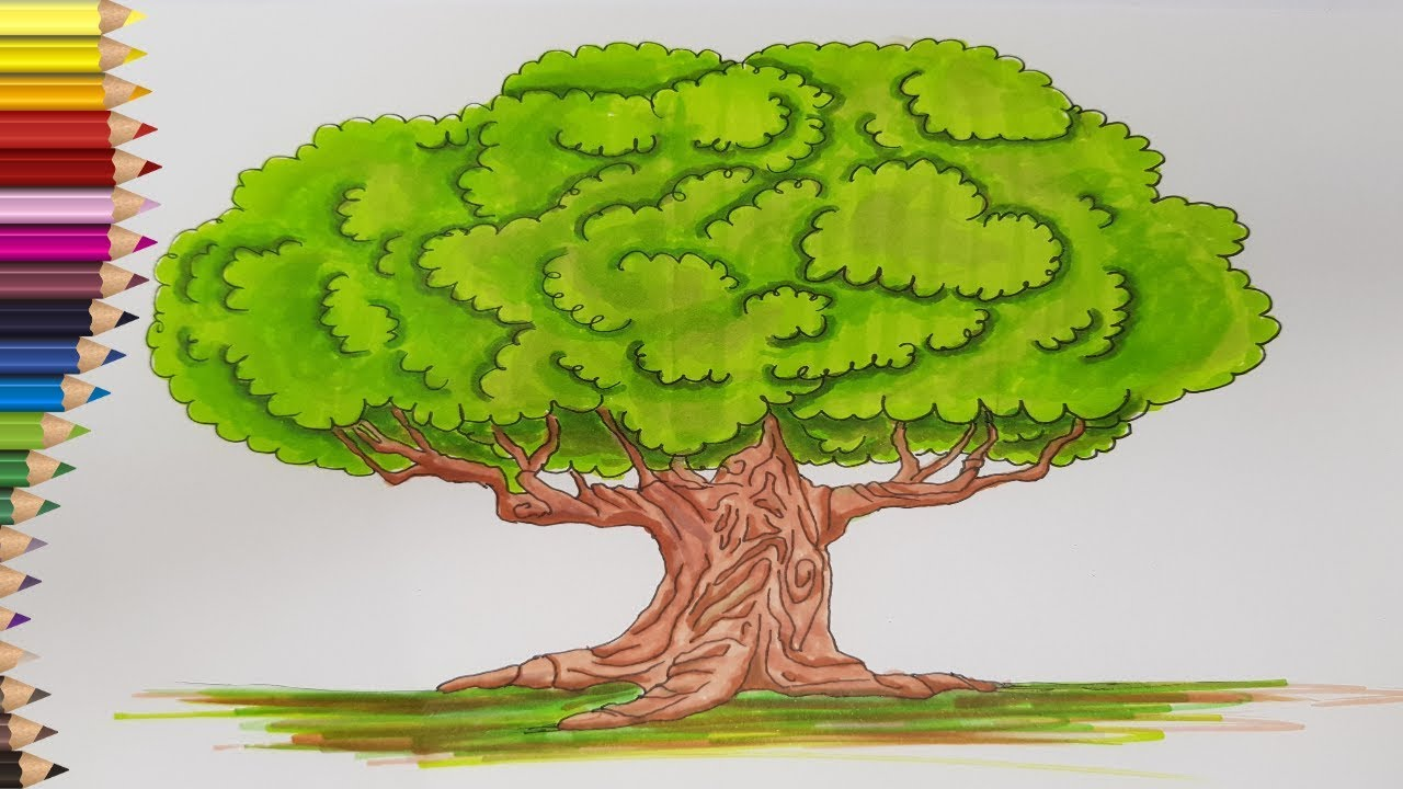 copac viu cu varicoză)