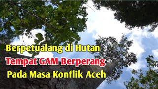 Cantiknya Satwa di Hutan Aceh