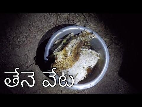 honey bee hunting | telugu | thene veta | inspired by my village show