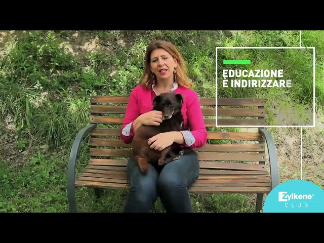L'educazione del cane: come dare al cane le regole base del comportamento