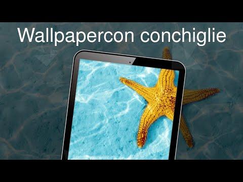Wallpaper 4k Con Conchiglie App Su Google Play