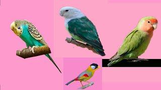 scientific names of 10 animals