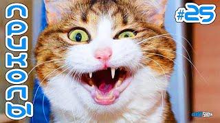 Приколы с Котами и Кошками 2019   Смешные Коты и Кошки и Другие Животные 2019 #25