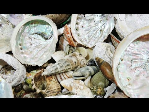 Seashells - How to Grind Cut and Polish | Liz Kreate