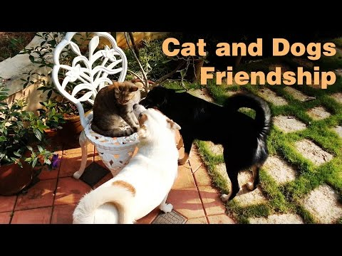 Funny Dogs trying to play with Cat