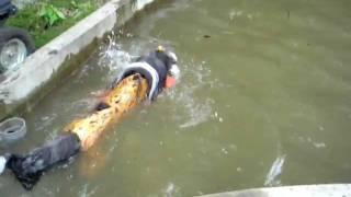 ピレニアンマスティフの母犬(瑞希)に続いて娘(愛里2歳)が プールに...