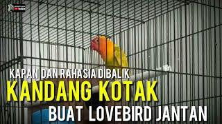 Download lagu RAHASIA DIBALIK LOVEBIRD JANTAN DIKANDANG KOTAK