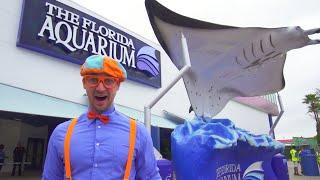 Blippi Visits The Aquarium and…