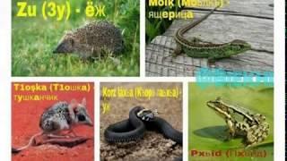 Чеченские название животных и птиц  в картинках.