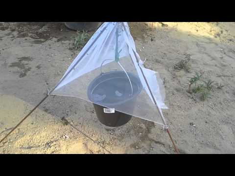 paarmapyydys diy tabanidae trap horsefly trap from finland youtube. Black Bedroom Furniture Sets. Home Design Ideas