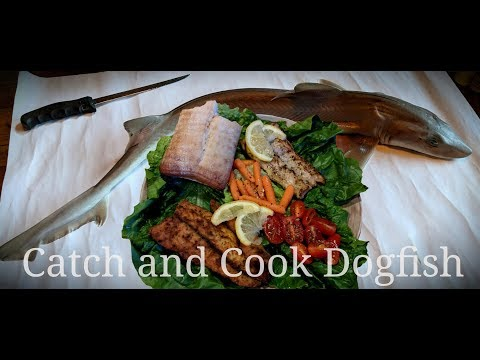Catch And Cook Sand Shark Aka Dogfish