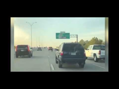 Frankie and Jess - GOOD VIBES: Dog stranded on houston freeway