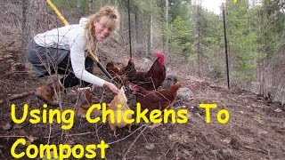 How To Make Compost With Chickens~ The BEST Compost EVER!