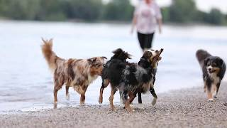 Hundestrand 2019 (2/2)