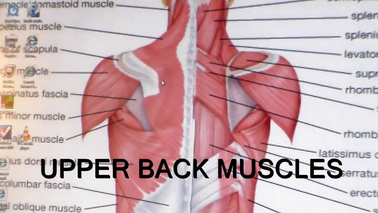 Thoracic Outlet Syndrome-Upper Back Mobility - YouTube