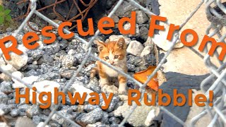 Kittens Rescued from Highway Rubble