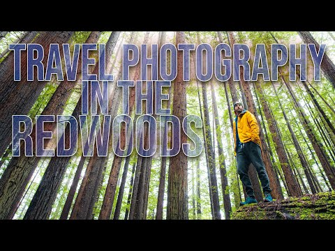 Travel Photography in The Redwoods