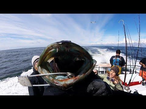 Westport Lingcod & Rockfish 2017: Easy Limits!