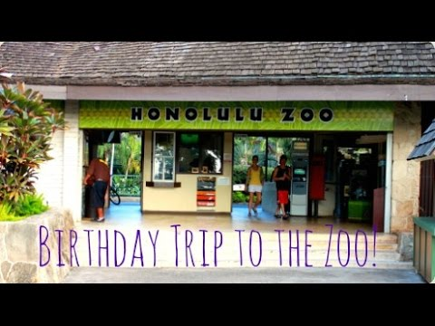 Aidans 4th Birthday Honolulu Zoo YouTube