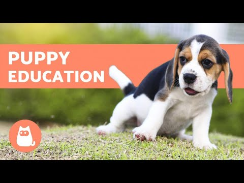 How to Educate a Puppy - Training for Newly Adopted Dogs