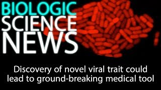 Science News - Discovery of novel viral trait could lead to ground-breaking medical tool