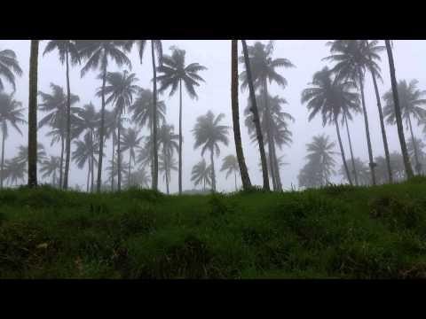 When it rains on a coconut farm  (Fiji)