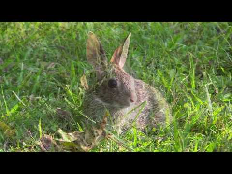 NCZoo's Wildlife Rehab Center Helps Rabbits