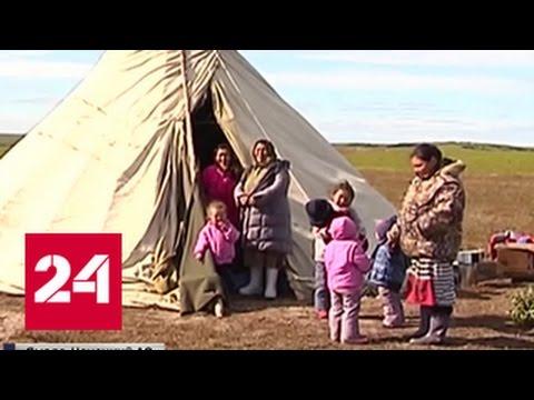 Сибирская язва: ямальская тундра по-прежнему в страхе