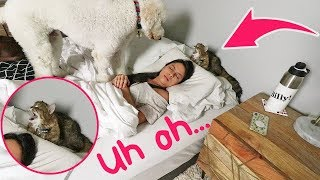 MY MORNING ROUTINE + Annoyingly (cute) PUPPY! 😜� // Goldendoodle versus Cat