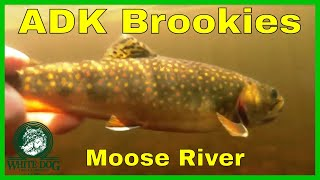 adirondack brook trout fly fishing moose river