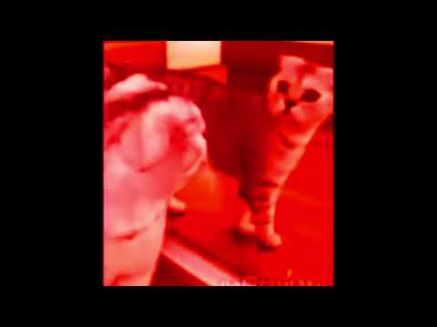 Funny cat gets scared from mirror REMASTERED
