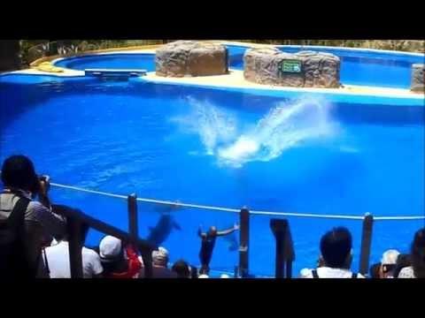 Dolphin Show Palmitos Park Maspalomas Gran Canaria 20.4.2015 Spain