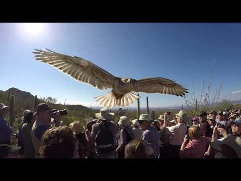Arizona-Sonora Desert Museum and Raptor Free Flight 2-16-2015