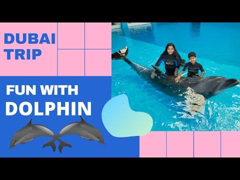 #Dubai #Dubaitourism  #Dubaidolphinarium Fun With Dolphins At Dubai Dolphinarium @DubaiDolphinarium