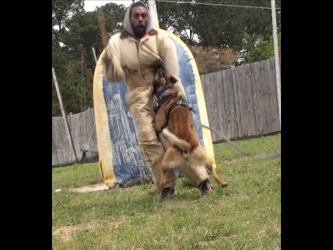 Truth about Protection versus Sport dogs