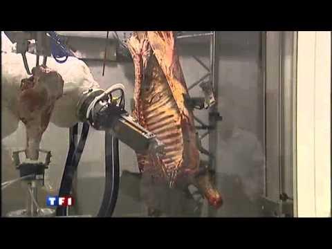 Syst me robotis pour la d coupe de viande srdviand for Quelle viande pour un barbecue