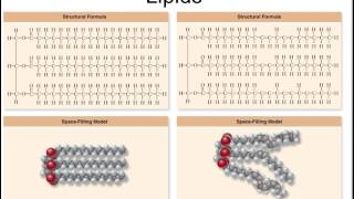 Lipids, structure and function