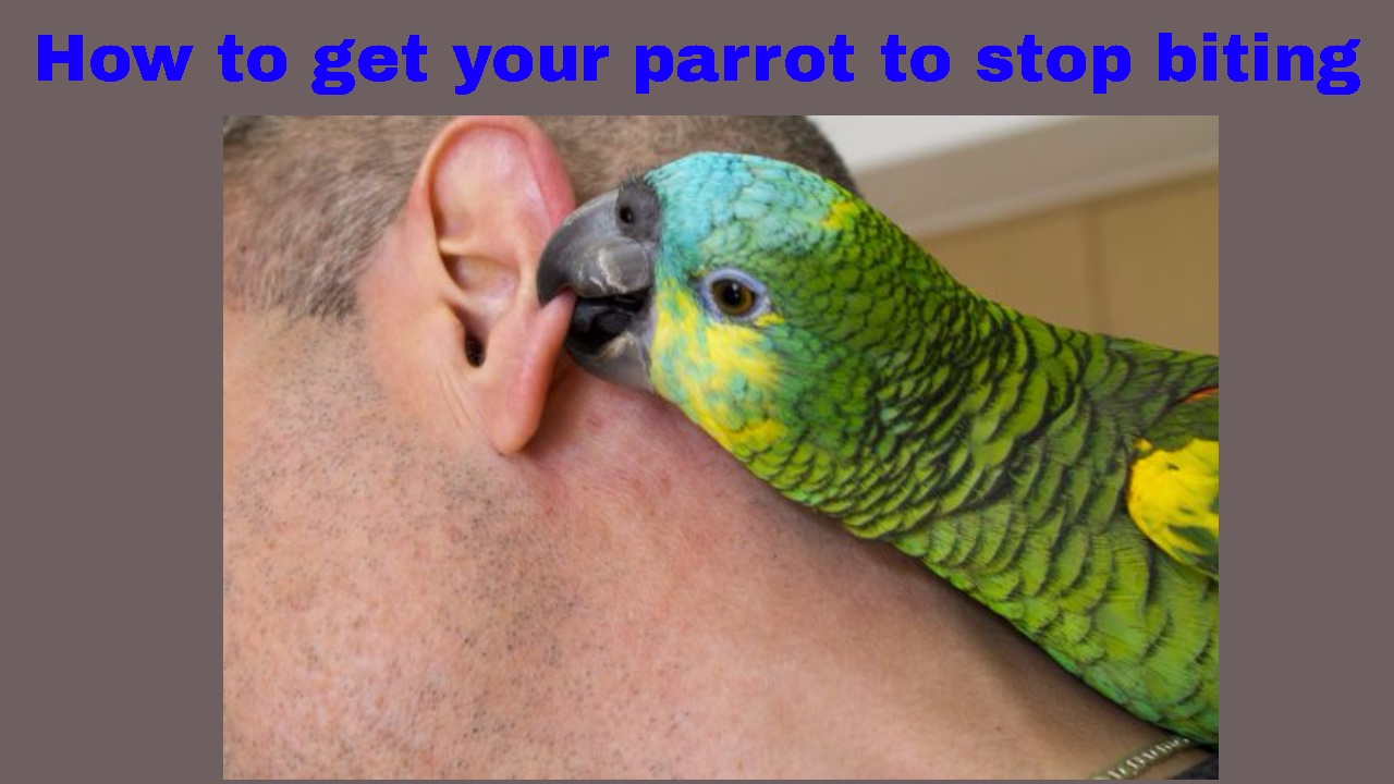 Image result for Why Does My Parrot Keep Biting Me?