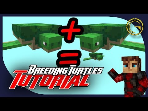 How To Breed Turtles Minecraft 1 13 Youtube