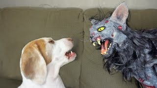 Cute Dog vs. Zombie Cat: Cute Dogs Maymo & Penny