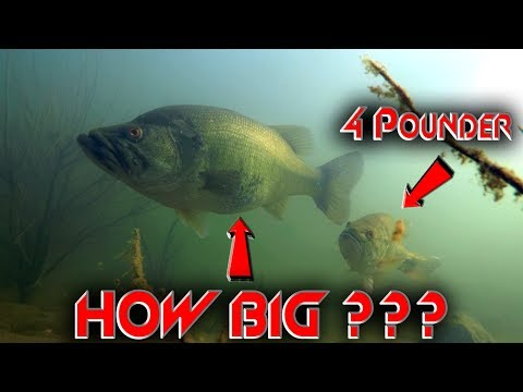 Thumbnail: The Biggest Bass We've Ever Seen Underwater!! | Underwater Footage Of A Teener!