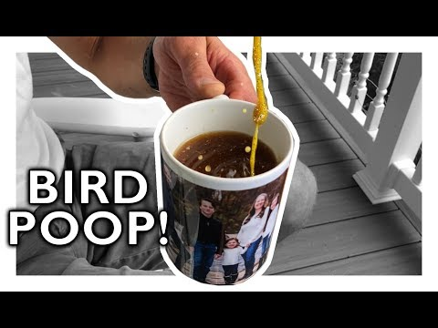 DIY: Cheap Bird Spikes  No More Poop In My COFFEE!