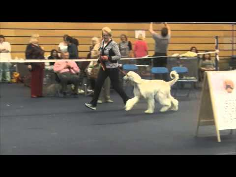 Western Afghan Hound Club 2015 - Best of Breed