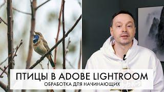 Обработка фотографий ПТИЦ в Adobe Lightroom с самого начала - пошагово | Внеочередной выпуск