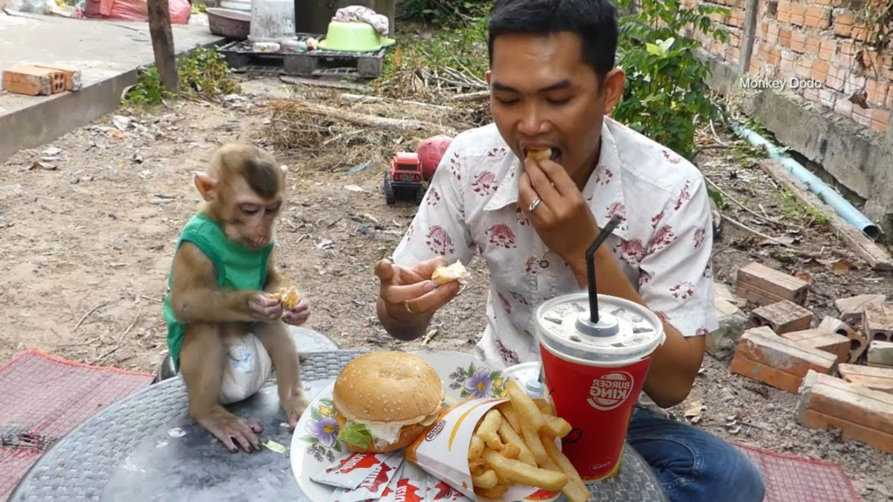 Monkey Dodo Very Surprise!! Dad And Dodo Eati Spicy Cheese Burger