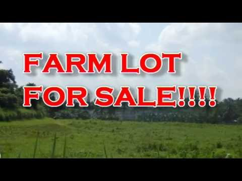 FARM LOT FOR SALE IN QUEZON PROVINCE NEAR IN LIPA BATANGAS