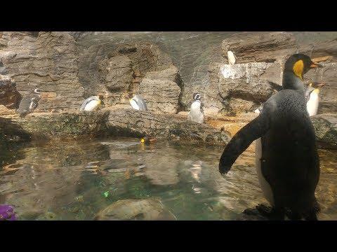 Cincinnati Zoo with Scares