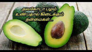Benefits Of Avocado in Tamil | Butter Fruit | Avocado Nutrition Facts | Healthy Life - Tamil.