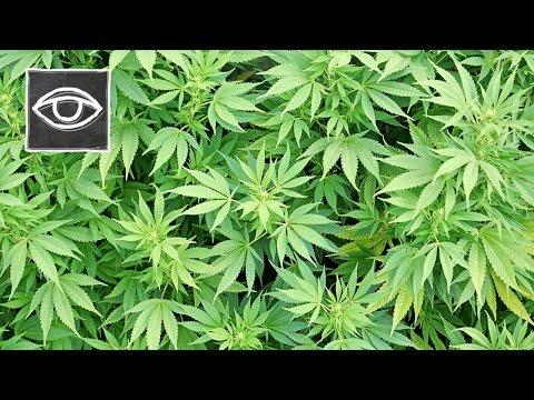 Het Marijuana Complot - Strikt Geheim