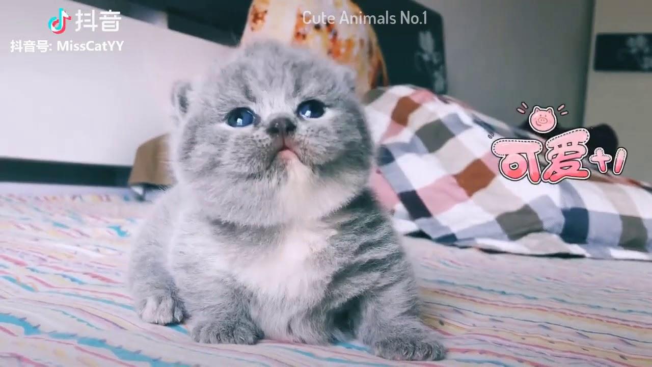 Tiktok Cat - Tik Tok Funny Cat - Cute Cat Videos Compilation 2019 #7 ???? Adorable Cats